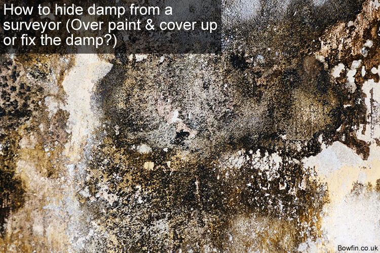 How to hide damp from a surveyor - Over paint & cover up or fix the damp