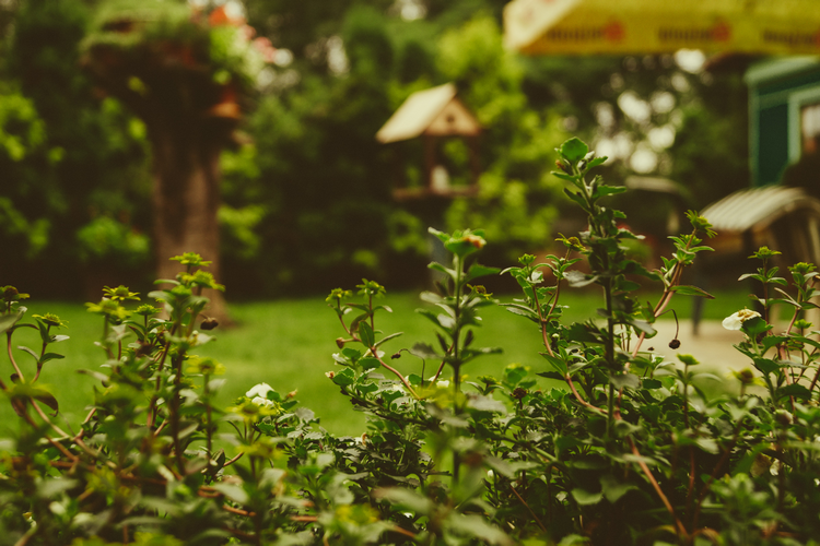 Should you buy a house with an east facing garden large