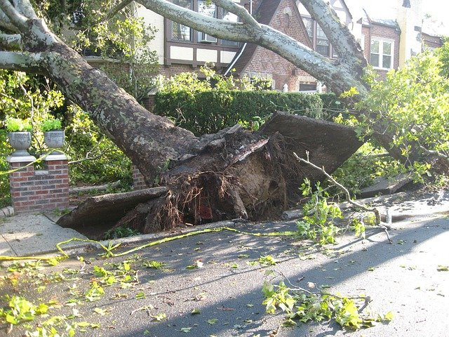 Will your insurance cover for a leaking roof caused by falling trees